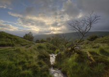Crooked Tree and Stream. Brecon Beacons Stock Photo