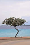 Crooked tree and tropical water. A small crooked tree silhouetted against the tropical waters of Bonaire royalty free stock image