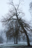 Crooked tree in winter haze Royalty Free Stock Photography