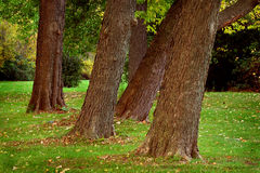 Crooked trees Royalty Free Stock Photo
