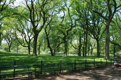 Crooked trees in New York Central Park. royalty free stock photos