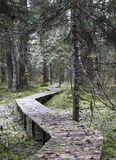 Crooked walkway through forest stock photography
