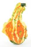 Crookneck pebbled pompoen. Royalty-vrije Stock Afbeeldingen