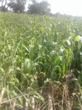 crop fotografie stock