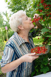 Crop. The elderly woman eats a currant Stock Image