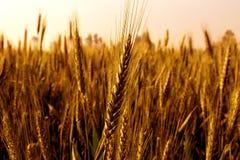 crop fotografie stock libere da diritti