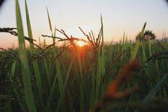 crop immagine stock