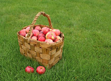 Crop of apples Stock Photo