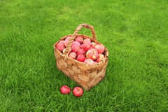 Crop of apples Royalty Free Stock Photography