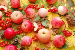 Crop of apples against autumn leaves Royalty Free Stock Photos