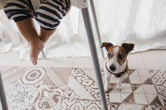 Crop baby and dog on floor. Crop shot of newborn in high chair and adorable dog sitting below on floor Royalty Free Stock Photography