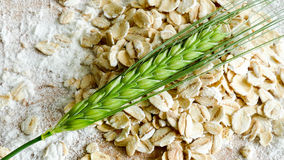 Crop barley with plain flower and oats - healthy eating concept Royalty Free Stock Photography