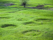 Crop Circles Stock Images