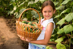 Crop of cucumbers. The girl shows the reaped crop cucumbers. Cucumbers are grown up in a hothouse Stock Photography