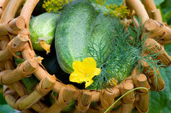Crop of cucumbers in a basket Royalty Free Stock Photos