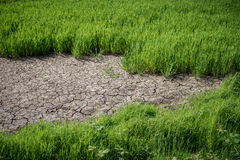 Crop Drought Royalty Free Stock Images