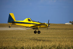 Crop Duster. Yellow and Blue Crop Dusting Plane spraying a field of corn Royalty Free Stock Image