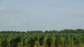 Crop Duster Over Corn Field stock video
