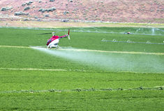 Crop dusting by helicopter. A helicopter is crop dusting a farm field in north central Oregon royalty free stock images