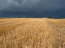 Crop field. Field before stormy rain Royalty Free Stock Images