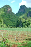 Crop field. In northern thailand Royalty Free Stock Photography