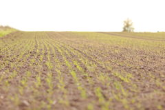 Crop field. Agricalture industry - huge crop field in early spring, Latvia, Baltic states Royalty Free Stock Photography