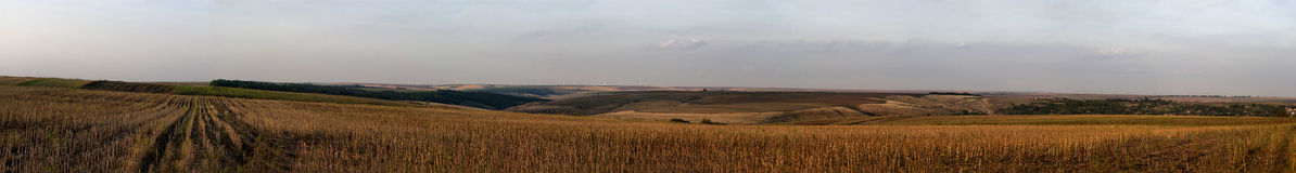 Crop field. Panorama of a crop field from Dobrogea Royalty Free Stock Image