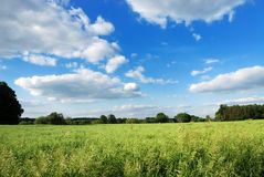 Crop field. Countryside landscape with a crop field, blue sky and some clouds royalty free stock image