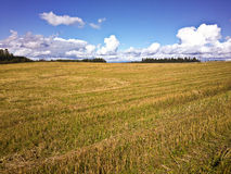 Crop field Royalty Free Stock Image