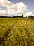 Crop field Royalty Free Stock Photography