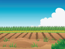 Crop field. Cartoon illustration of a crop field Royalty Free Stock Photos
