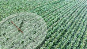 Crop field with a clock. Digital composite of a wide crop field with an analogue clock running in the foreground stock video footage