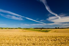 A crop field in Denmark. Along the countryside in the vicinity of Ã…rhus. The image shows a yellow field with some green grass far away and a blue sky with royalty free stock images