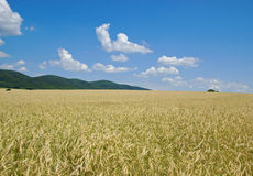 Crop Field with Forested Hills in Distance. Hayfield with Forested Hills in Distance Royalty Free Stock Photo