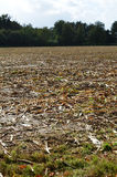 Crop field after the harvest. Stock Images