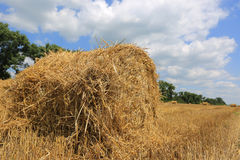 Crop field with hay rolls Stock Photo