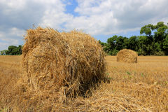 Crop field with hay rolls Stock Images