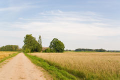 Crop field and house. Big crop field with house and road Stock Photo