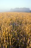 Crop field and morning mist Stock Photography