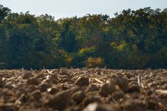 Crop field near the woods ground take royalty free stock photography