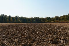 Crop field near the woods, crop field prepared for the winter, royalty free stock images