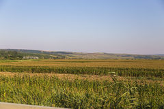 Crop field. Panorama of a crop field from Dobrogea Royalty Free Stock Photo