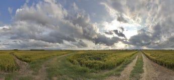 Crop field panoramic Stock Image