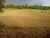 Crop field Stock Image