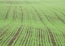 Crop field in spring with harrow trace Stock Photography