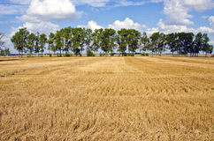 Crop field with straw after harvesting Royalty Free Stock Photos