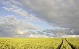 Crop field in summer evening Royalty Free Stock Image
