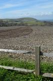 Crop field on the Sussex Southdowns. Stock Photos