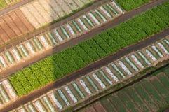 Free Crop Fields Stock Image - 29699201