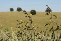 Crop fields. On a prairie Royalty Free Stock Photos
